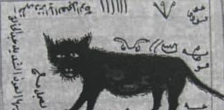Kara Kedi Büyüsü