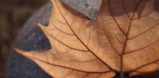 Kuru Yaprak Büyüsü